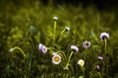 Die Blumen Stockfotografie