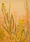 Die Blumen Lizenzfreie Stockfotos
