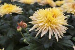 Die Blumen Stockbild