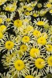 Die Blumen Lizenzfreie Stockfotografie