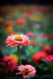Die Blumen Lizenzfreies Stockbild