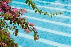 Die Blumen auf dem Hintergrund des Pools Stockfoto