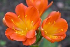 Die Blumen auf Succulent stockfotos