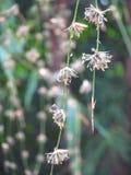 Die Blumen des Bambusses, wenn das Bambusblühen fertig ist, stirbt es Abbildung der roten Lilie Lizenzfreie Stockbilder