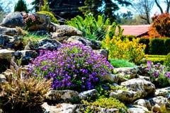 Die Blumen des botanischen Gartens, Bulgarien, Balchik stockfotografie