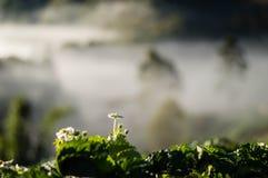 Die Blumen des Erdbeerbaumes stockfotos