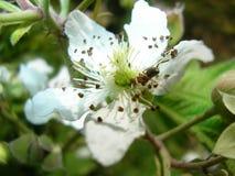 Die Blumen des weißen Farbwachsens stockfotografie