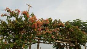 , Die Blumen in einem schönen Garde, lizenzfreie stockbilder