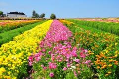 Die Blumen-Felder von Karlsbad Stockbild
