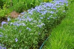 Die Blumen im Garten Lizenzfreie Stockfotos