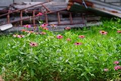 Die Blumen im Park stockbild