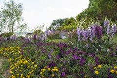 Die Blumen im Park Lizenzfreies Stockbild