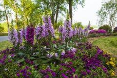 Die Blumen im Park Stockfotografie