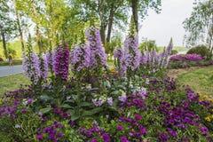 Die Blumen im Park Stockfoto