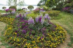 Die Blumen im Park Lizenzfreie Stockbilder