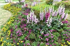Die Blumen im Park Lizenzfreie Stockfotos