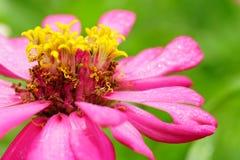 Die Blumen im Park mit grünem Hintergrund stockfoto