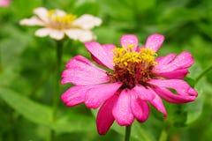 Die Blumen im Park mit grünem Hintergrund stockfotos