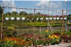 Die Blumen mit Wolkenhimmel lizenzfreies stockfoto