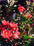 Die Blumen sind ausgezeichnet Lizenzfreie Stockfotos