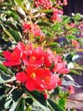 Die Blumen sind ausgezeichnet Lizenzfreies Stockfoto