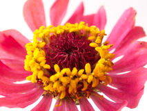 Die Blumen sind gelber Kopf Stockfotos