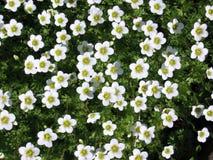 Die Blumen sind kleine und grüne Blätter Lizenzfreie Stockbilder