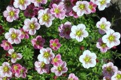 Die Blumen sind kleine und grüne Blätter Lizenzfreie Stockfotos