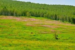 Die Blumen und der Wald auf dem Abhang Stockfotos