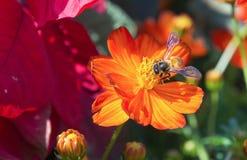 Die Blumen und die Insekten im Park Stockfotos