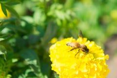 Die Blumen und die Insekten im Park Stockbild