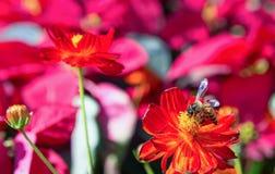 Die Blumen und die Insekten im Park Lizenzfreies Stockfoto