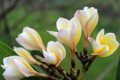 Die Blumen in voller Blüte Lizenzfreie Stockbilder