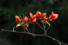 Die Blumen in voller Blüte Stockfotografie
