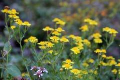 Die Blumen in voller Blüte Lizenzfreie Stockfotos
