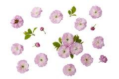 Die Blumen von Mandeln stockbilder