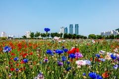 Die Blumen von Ulsan Stockfotos