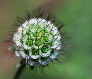 die Blumendetails Lizenzfreie Stockbilder