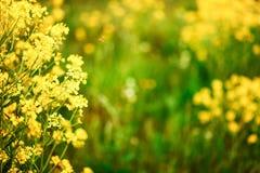 Die Blumenhintergründe Stockbild