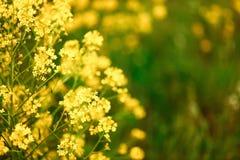 Die Blumenhintergründe Lizenzfreies Stockbild