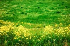 Die Blumenhintergründe Lizenzfreies Stockfoto