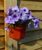 Die Blumenpetunien in einem Topf Lizenzfreie Stockbilder