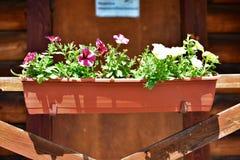 Die Blumentöpfe Diese Blumen sind nett stockfotografie
