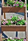 Die Blumentöpfe Diese Blumen sind nett stockfotos