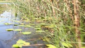 Die Bootssegel entlang dem Skadar See stock video