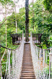 die Brücke auf hohem Baumblick um Walddraufsicht Lizenzfreie Stockfotografie