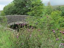 die Brücke im Frühjahr von der Wiese Stockfotografie