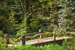 Die Brücke im Herbstwald Sigulda, Lettland stockfotografie