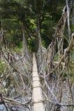 Die Brücke in Neu-Guinea Stockfotos