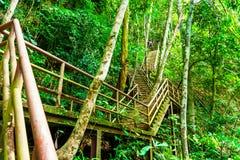 Die Brücke steigt in den Wald ein lizenzfreies stockbild